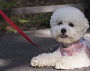 Money Tips for New Dog Owners