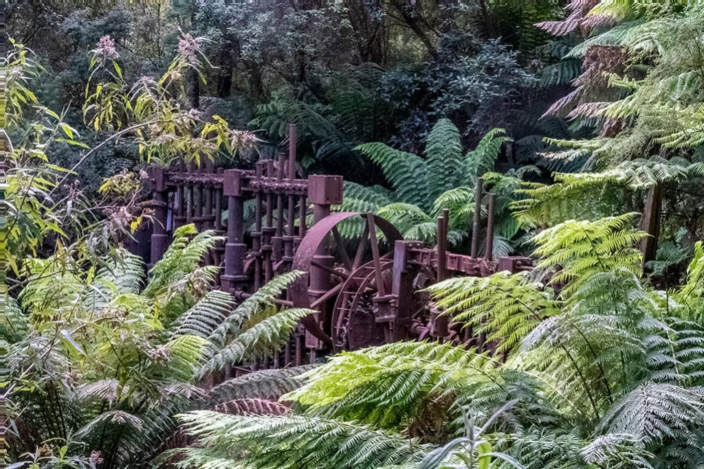 Heritage mining stampers surrounded by tree ferns in North East Tasmania