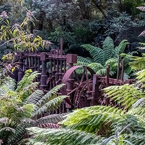 Old Anchor mine tin stampers surrounded by tree ferns