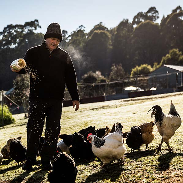 Graham feeding grain to a group of hens and one rooster.