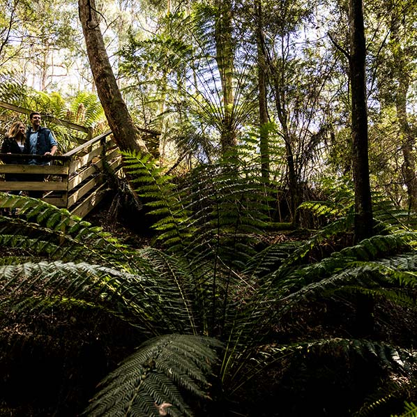 Giant man ferns are growing on the floro of the heritage Ah Ping alluvial mine site.
