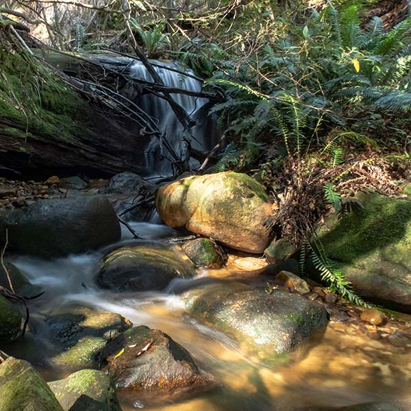This is a small cascade on the Guiding Star Creek.
