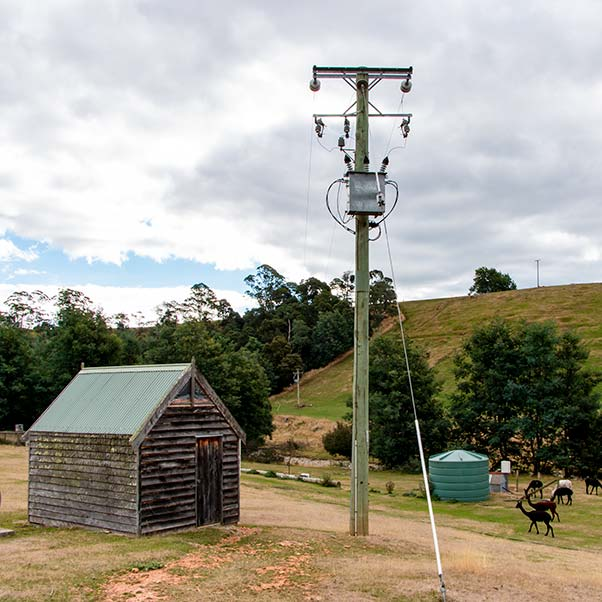 A power pole stands near a small timber shed.