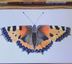 watercolor tortoiseshell butterfly