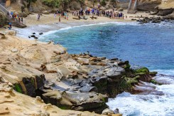 Seals on rocks at La Jolla Cove, San Diego