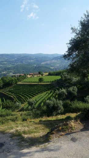 douro-valley-june-2016-5