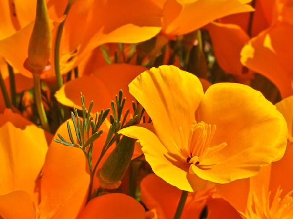 00.Tile.Wildflowers
