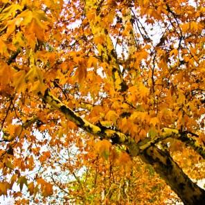fall-019