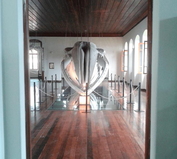 museu_pesca_santos_3