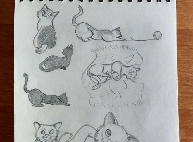 Estudos de anatomia de gato
