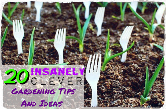 20 Insanely Clever Gardening Tips And Ideas TinHatRanch