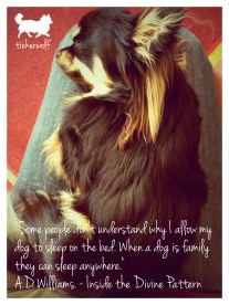 tinkerwolf dog photo quotes 23 Some people don't understand