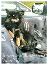 tinkerwolf dog photo quotes 26 My best friend