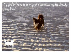 tinkerwolf dog photo quotes 56 My goal in life