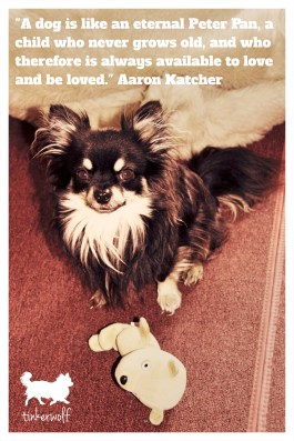 tinkerwolf dog photo quotes 68 A dog is like an eternal Peter Pan