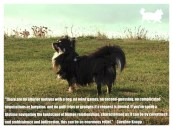 tinkerwolf dog photo quotes 69 There are no ulterior motives with a dog