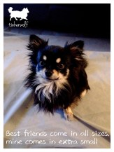 tinkerwolf-dog-photo-quotes-76-best-friends-come-in-all-sizes