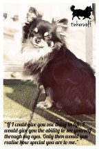 tinkerwolf-dog-photo-quotes-80-realise-how-precious-you-are