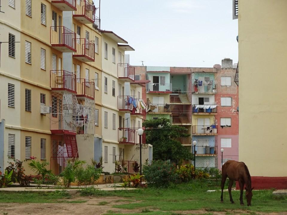 Pferd im Vorgarten