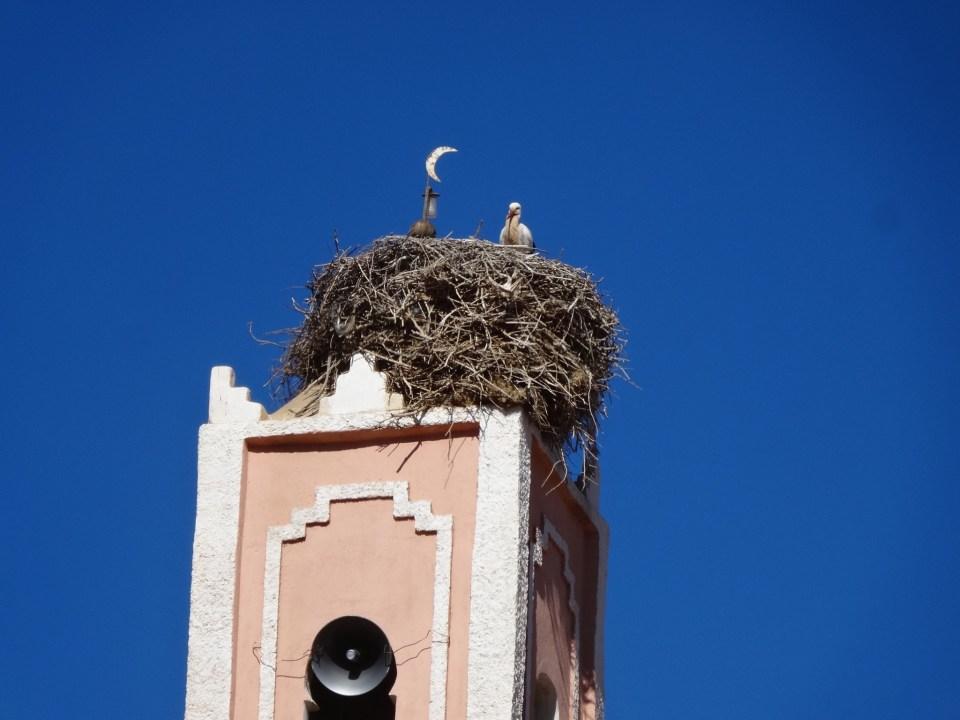 Burgenländischer (?) Storch in seinem Winterdomizil aka. Minarett