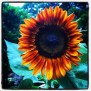 What Is The Meaning Of A Sunflower Symbolism Spiritual