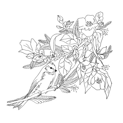 Lineart illustration - Birds and nature