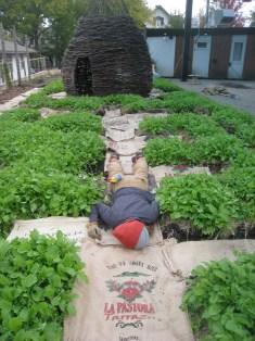 Koby, sleeping in the greens.