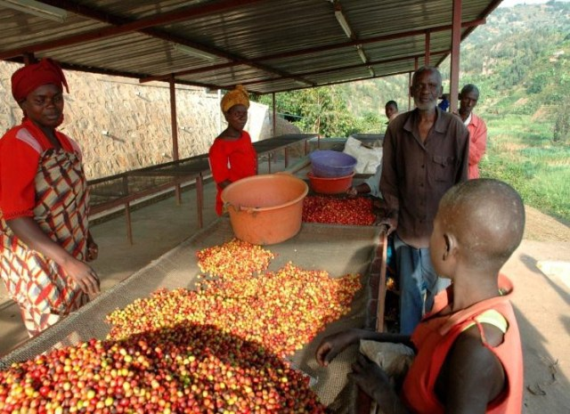 Rwanda Coopac Washing Station 2