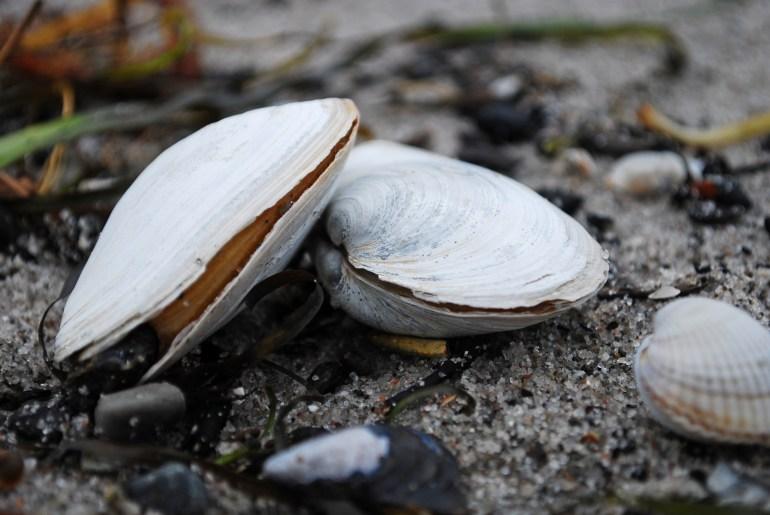 Wie landet Plastik im Meer, Wie kommt Plastik ins Meer, Warum landet Plastik im Meer, Wie gelangt Plastik ins Meer