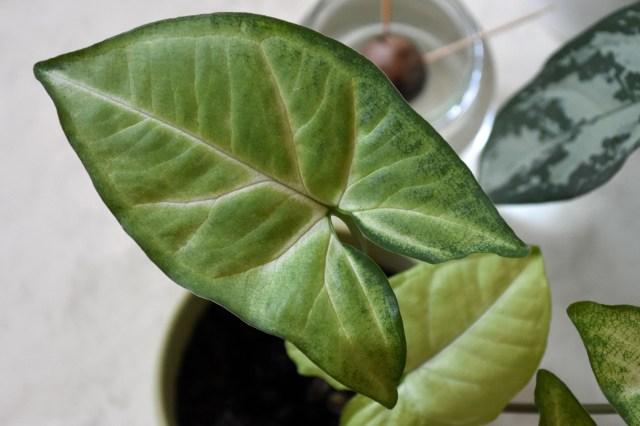 Nachhaltige Zimmerpflanzen, Urban Jungle, Zimmerpflanzen, Houseplants, nachhaltige Pflanzen