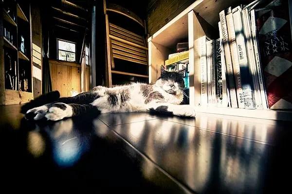 Calypso enjoying the morning sun