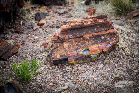 Petrified Forest - 0003