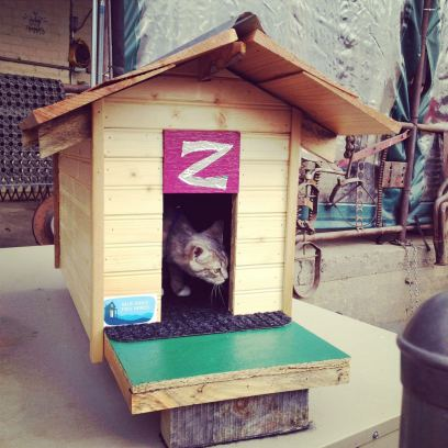 Blue Ridge Tiny Homes, another local tiny house company, brought a tiny kitty house, just for fun!