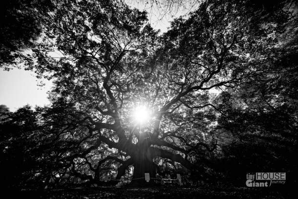 THGJ Angel Oak - 0001