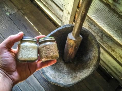 Carolina gold - rice