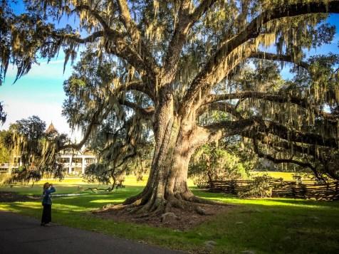 THGJ Magnolia Plantation - 0027