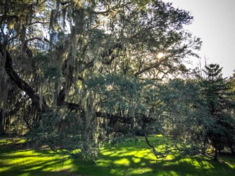 THGJ Magnolia Plantation - 0028