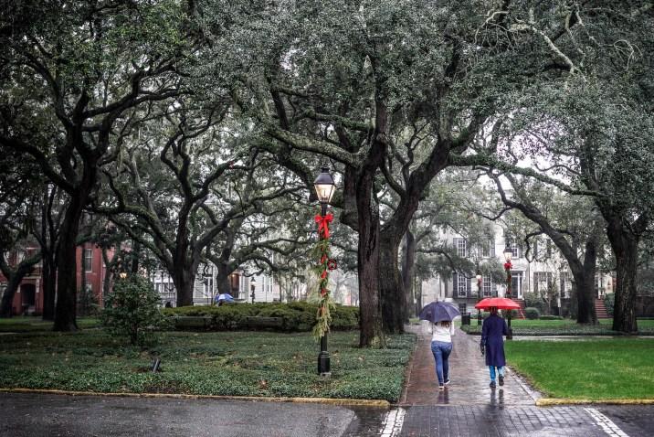 THGJ Savannah Rain - 0003