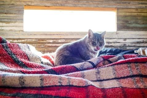 Jimmy! John's Cat and Travel Companion