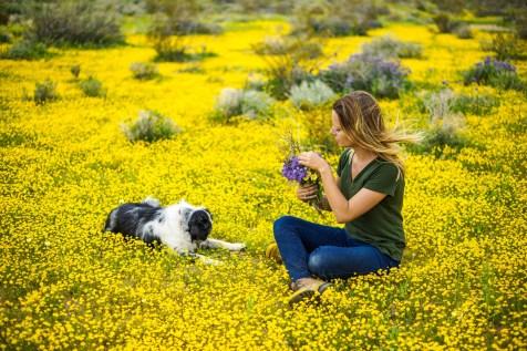 THGJ California Wild Flowers - 0008