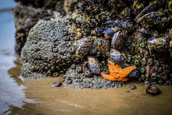 Oregon Coast Short Beach - 0011
