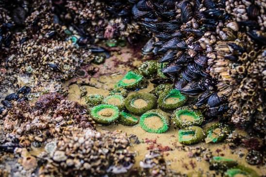 Oregon Coast Short Beach - 0012
