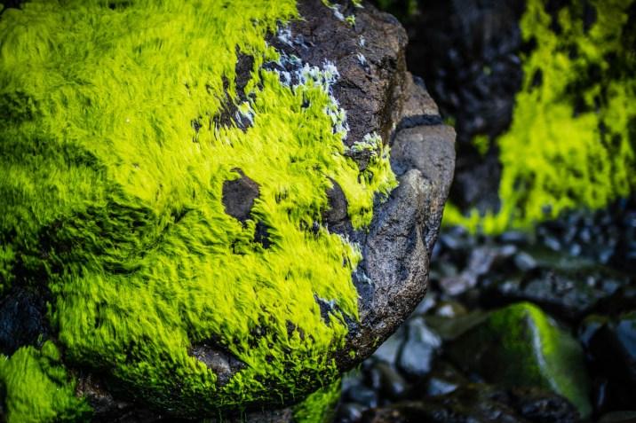 Oregon Coast Short Beach - 0015