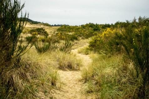 Oregon Dunes - 0009