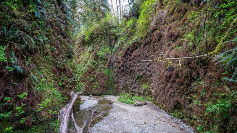 Fern Canyon Hike - 0006