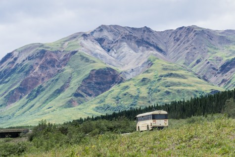 THGJ Denali Bus Tour - 0021