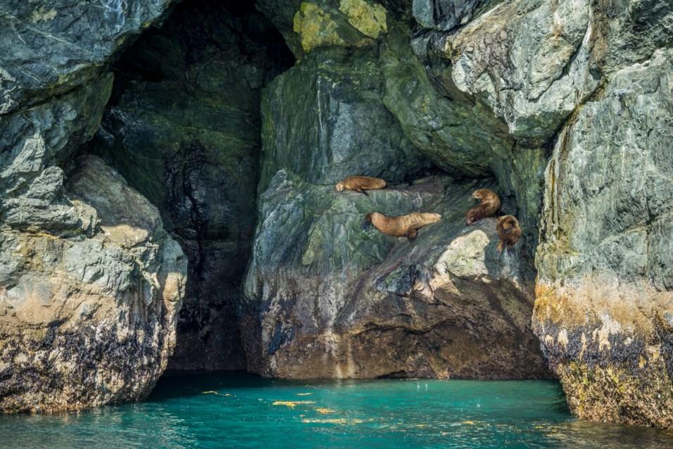 Sea Lions - 0001