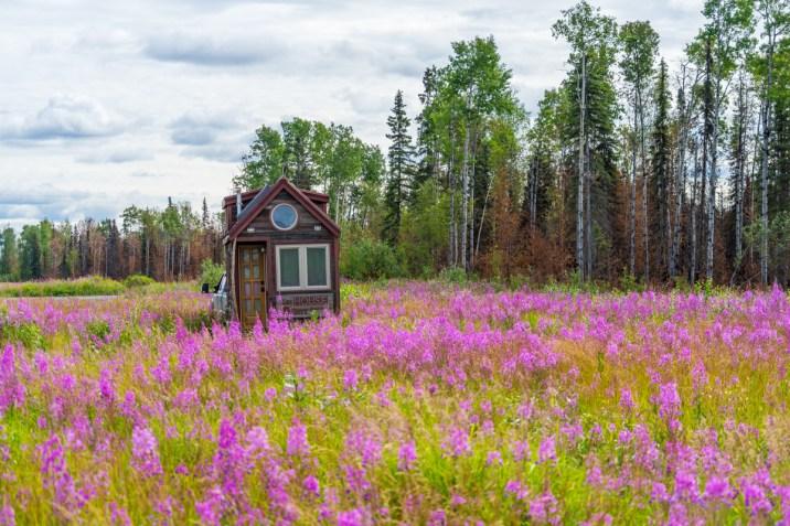 THGJ Alaska Fireweed - 0002