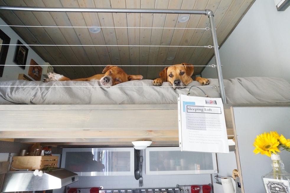 tiny house pets in sleeping loft