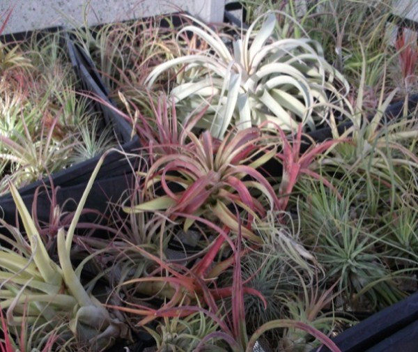 Air-Plants-for-Tiny-Houses-by-Linda-Branch-002